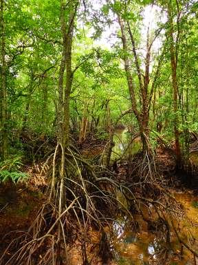 Forets de Bornéo