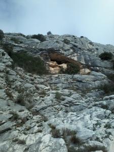 L'entrée presque secrète de la grotte aux champignons...